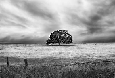 Photograph - Lone Valley Oak Horizontal by Abram House