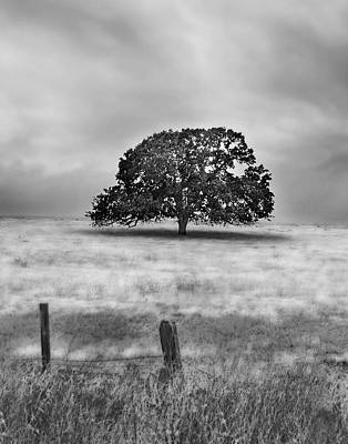 Photograph - Lone Valley Oak Vertical by Abram House