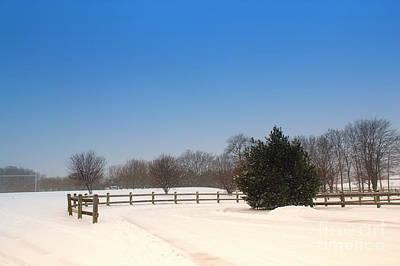 Lone Winter Evergreen  Art Print