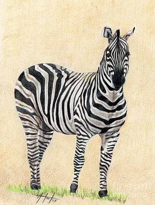 Drawing - Lone Zebra by Audrey Van Tassell