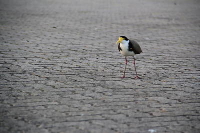 Photograph - Lonely Bird by A K Dayton