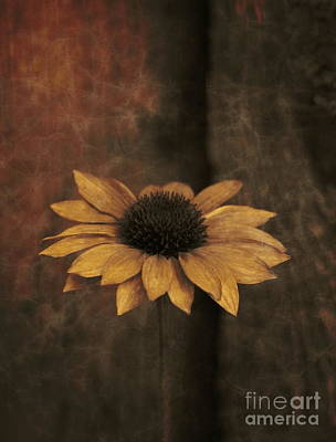 Photograph - Lonely Coneflower by Marjorie Imbeau