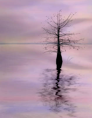 Photograph - Lonely Cypress by David and Carol Kelly