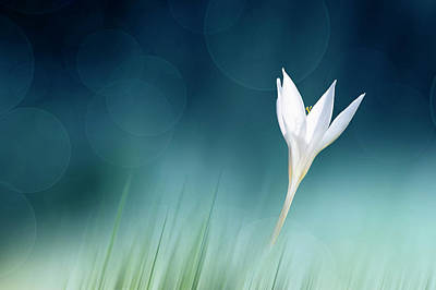 Floral Photograph - Lonely by Doris Reindl