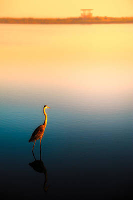 Photograph - Lonely Egret At Sunset by Celso Diniz