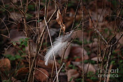 Photograph - Lonely Feather by Mark McReynolds