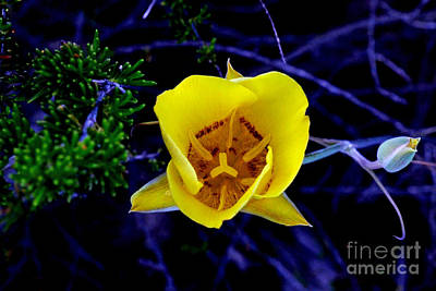 Photograph - Lonely Flower by Third Eye Perspectives Photographic Fine Art