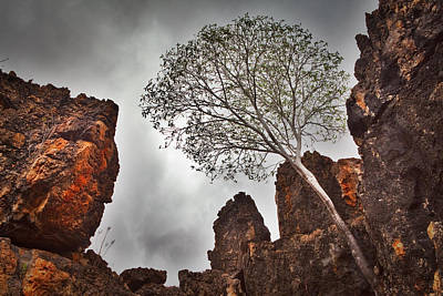 Harsh Conditions Photograph - Lonely Gum Tree by Dirk Ercken