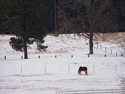 Photograph - Lonely Horse by Kevin Croitz