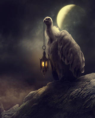 Vulture Wall Art - Photograph - Lonely In The Moonlight by Cindy Grundsten