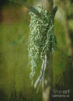 Lonely Lichen Art Print by Judi Bagwell