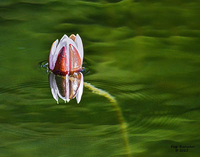 Photograph - Lonely Lily by Peg Runyan