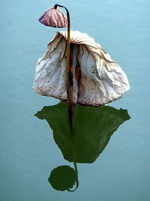 Lonely Lotus Art Print by Julia Ivanovna Willhite