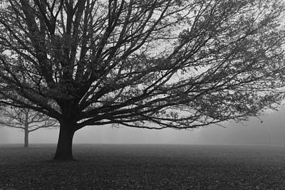 Photograph - Lonely Low Tree by Maj Seda