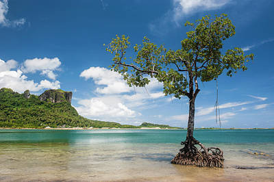 Micronesia Photograph - Lonely Mangrove Tree Standing by Michael Runkel