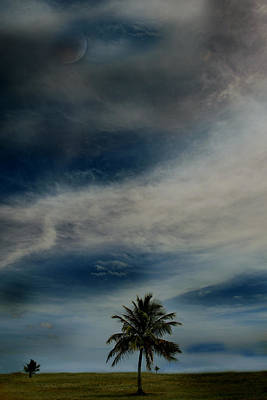 Photograph - Lonely Palm by Joseph G Holland