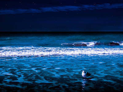 Photograph - Lonely Seagull by Randy Sylvia