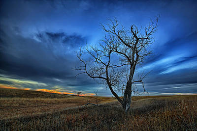 Elm Photograph - Lonely Sentinel by Thomas Zimmerman
