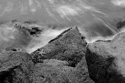 Photograph - Lonely Starfish by Silvio Ligutti