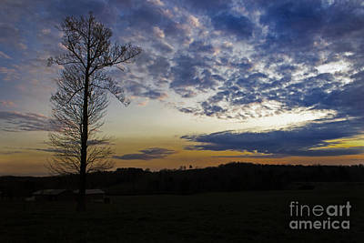 Photograph - Lonely Sunset by Michael Waters