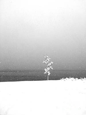 Photograph - Lonely Tree by A K Dayton
