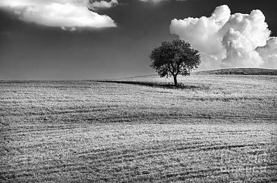 Photograph - Lonely Tree  by Anna Om