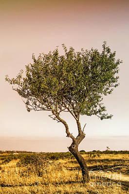 Mystery Photograph - Lonely Tree by Carlos Caetano