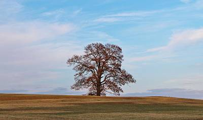 Lonely Tree Art Print by Cynthia Guinn