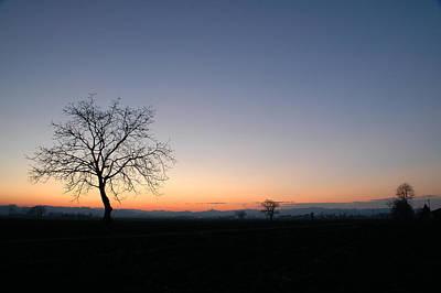 Frosty Mug Photograph - Lonely Tree by Guido Strambio