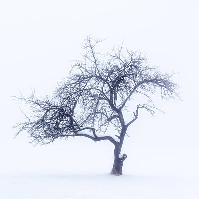 Lonely Tree In The Fog Art Print