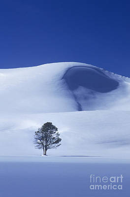 Photograph - Lonely Tree In Winter Yellowstone National Park by Dave Welling