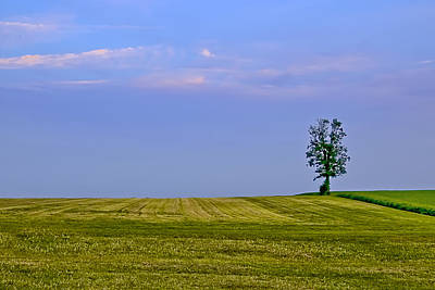 Photograph - Lonely Tree by Maria Coulson