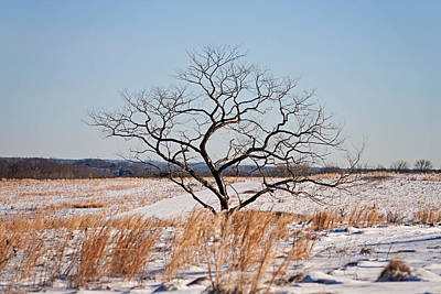 Photograph - Lonely Tree by Michael Porchik