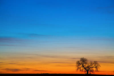 Sunrise Photograph - Lonely Tree On The Plains by James BO  Insogna