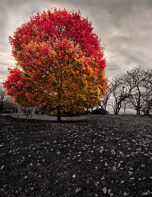 Photograph - Lonely Tree by Peter Lakomy
