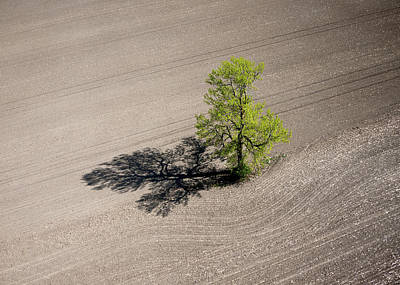 Photograph - Lonely Tree, Richmond by Rob Huntley