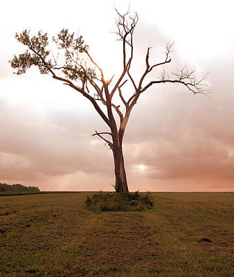 Art Print featuring the photograph Lonely Tree by Ricky L Jones