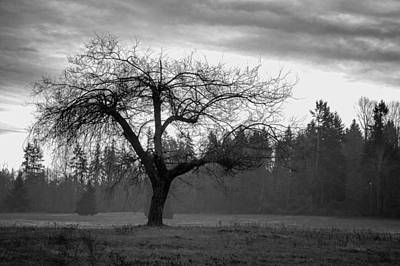 Photograph - Lonely Tree by Ron Roberts