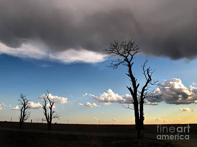 Photograph - Lonely Trees On The Road by Daliana Pacuraru