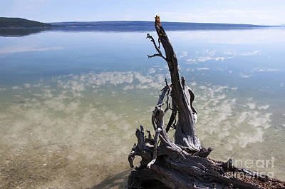 Photograph - Lonely Yellowstone Lake by Brenda Kean