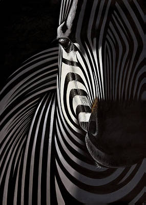 Lonely   Zebra Art Print