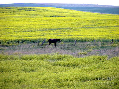 Photograph - Lonesome Horse by John Potts