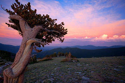 Photograph - Lonesome Pine by Jim Garrison
