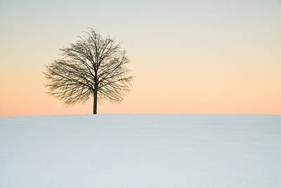 Wall Art - Photograph - Lonesome Tree by Claus Puhlmann