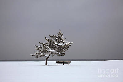 Stratford Photograph - Lonesome Winter by Karol Livote