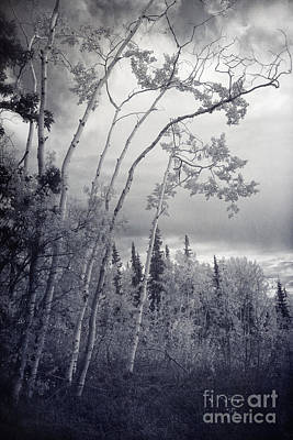 Photograph - Lonesome Woods by Priska Wettstein