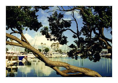 Long Beach Ca Photograph - Long Beach Marina by Jack Pumphrey
