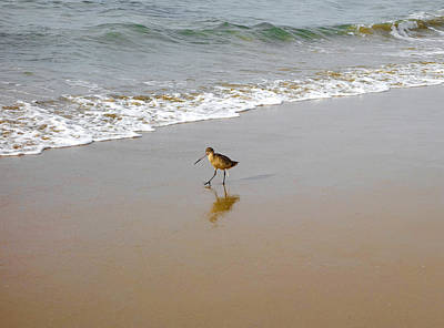 Photograph - Long-billed Dowitcher by Robert Meyers-Lussier