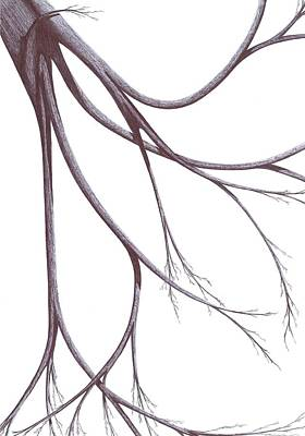 Drawing - Long Branches by Giuseppe Epifani