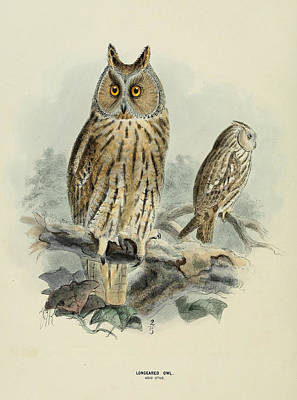 J.j. Long Painting - Long Eared Owl by Dreyer Wildlife Print Collections